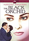 the-black-orchid-20960.jpg_Drama, Romance_1958