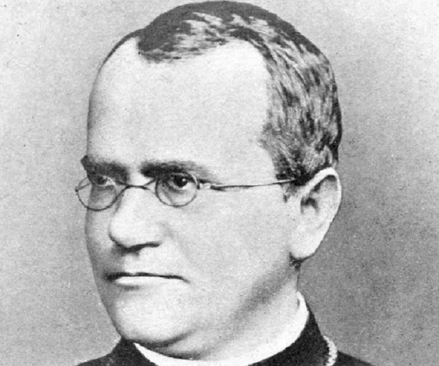 gregor mendal biography Gregor mendel (jul 20, 1822-jan 6, 1884) was a priest, teacher, and pioneer in the field of genetics he presented his paper on his experiments in 1865 shortly.