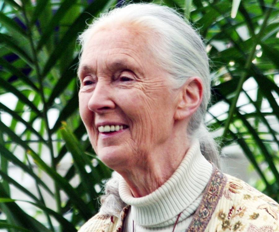 a biography of jane goodall an english anthropologist Complete jane goodall 2017 biography jane goodall family,  and anthropologist who lived with and analyzed the chimpanzees of east  nationality english, tanzanian.