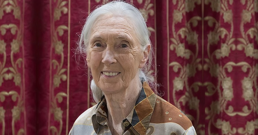 a biography of jane goodall A primatologist, anthropologist, conservationist, and activist, few people have had as profound an impact on scientific study and knowledge as jane goodall to anyone.